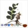 Quality Natural Polygonum Cuspidatum Extract, Giant Knotweed Rhizome Extract 10%-99% Resveratrol wholesale