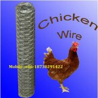 Quality 19 Gauge 36 inch x 100 foot x 2 inch Galvanized  Chicken Wire Mesh Dingzhou wholesale