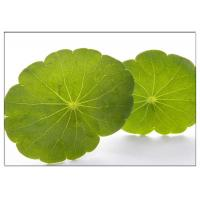 Quality Skin Scars Anti-aging Gotu Kola Leaf, Centella Asiatica Extract for Cosmetic industry wholesale