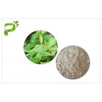 Quality CAS 989 51 5 Egcg Green Tea Leaf Extract , Green Tea Supplements For Weight Loss wholesale
