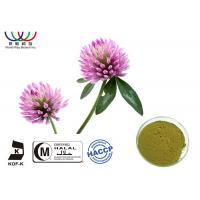 Natural Organic Red Clover Extract Balance Estrogen Pharmaceutical Grade