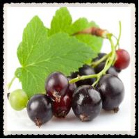 Best Plant extract black currant anthocyanin wholesale