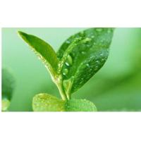 Quality Green Tea Polyphenols wholesale