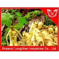 Quality Immunity Enhancers Ginseng extract powder Factory Price wholesale