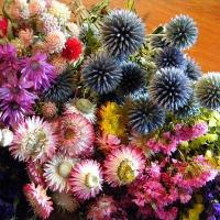 Buy cheap Everlasting Flowers Offer Beauty for Years from wholesalers