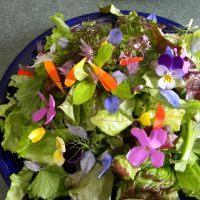 Buy cheap Sprout Your Own Microgreens, Salad Mixes, and Edible Flower Garnishes! from wholesalers