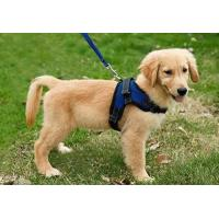 Quality Copatchy No Pull Reflective Adjustable Dog Harness With Handle medium blue wholesale