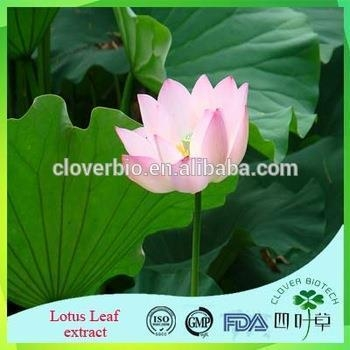 Cheap Lotus Root Powder Extract 20:1 /Lotus Seed Extract Nuciferin 0.2% 1% Lotus Leaf Extract for sale