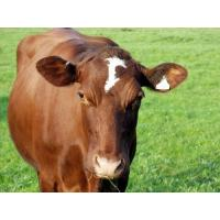 Quality Calf Grower Feed wholesale